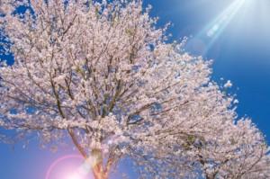 terapia_primavera