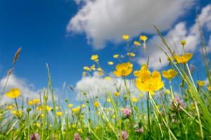 florecer_primavera