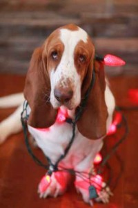 453833775-christmas-basset-gettyimages