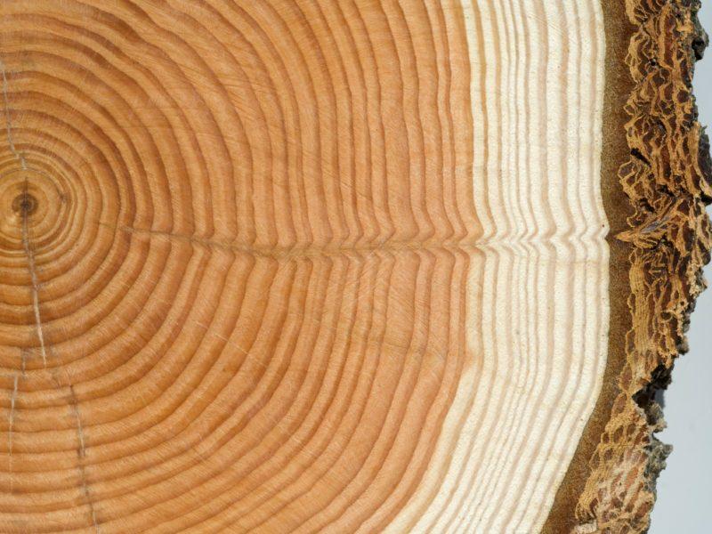 Holzscheibe, Jahresringe