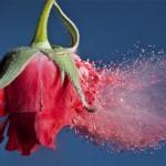 Heridas y estrategias del amor: sobre la codependencia y la herida de abandono