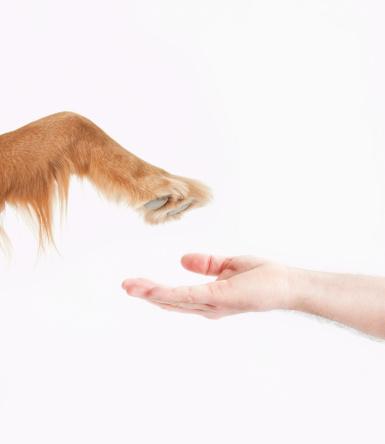beneficios_convivir_perro